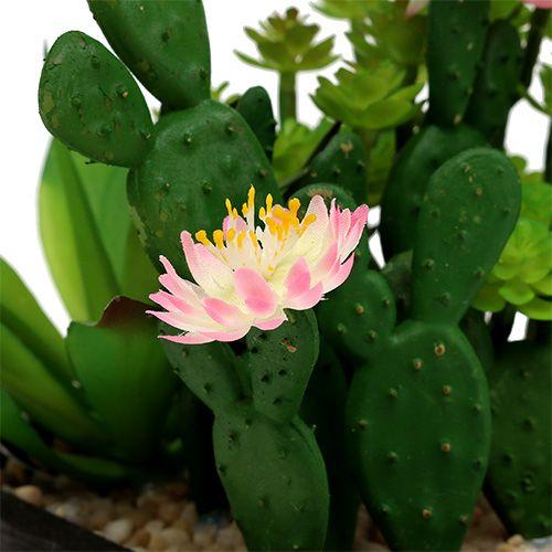 kaktus mit bl te 14cm im holzkasten kaufen in schweiz