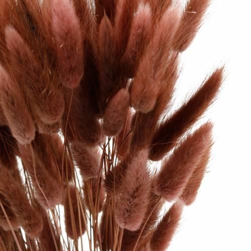 Trockenfloristik Hasenschwanz-Gras Lagurus Rotbraun 100g