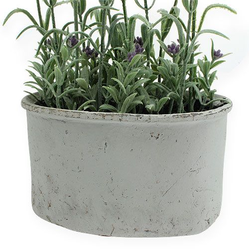 lavendel im keramik topf h43cm kaufen in schweiz. Black Bedroom Furniture Sets. Home Design Ideas