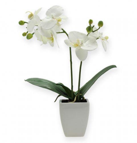 deko orchidee phalaenopsis mit bertopf 32cm kaufen in. Black Bedroom Furniture Sets. Home Design Ideas