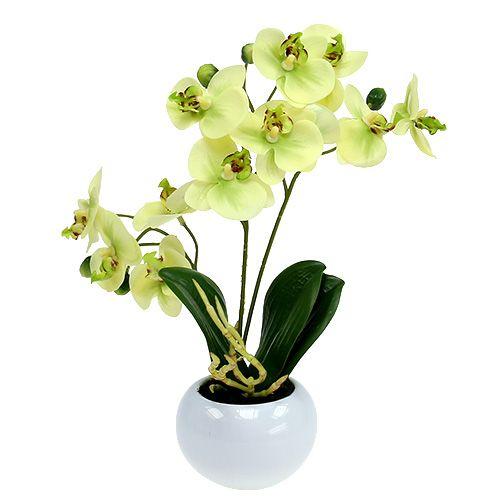 orchideen im topf gr n h30cm kaufen in schweiz. Black Bedroom Furniture Sets. Home Design Ideas