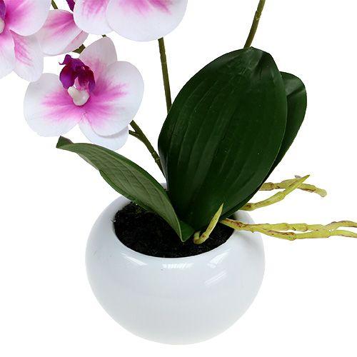 orchideen im topf h30cm wei rosa kaufen in schweiz. Black Bedroom Furniture Sets. Home Design Ideas