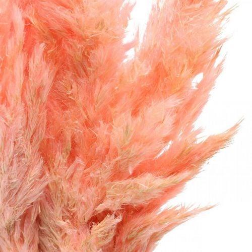 Pampasgras getrocknet Rosa Trockenfloristik 65-75cm 6St im Bund