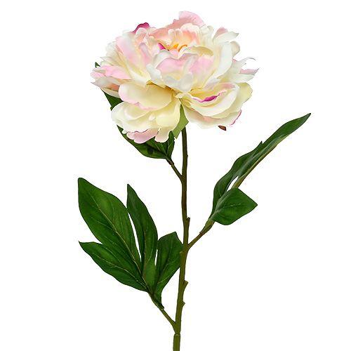 Pfingstrose Creme-Rosa 78cm