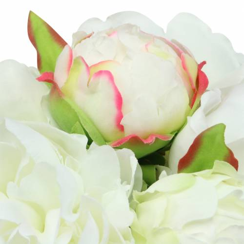 Pfingstrose Bund Weiß / Rosa 27cm 6St