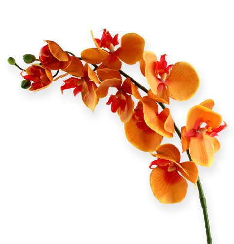 Orchidee orange