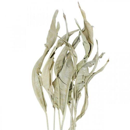 Strelitzienblätter getrocknet Grün gefrostet 45-80cm 10St