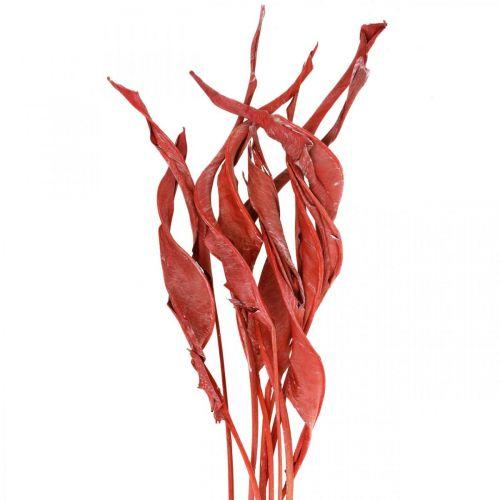 Strelitzienblätter Rot gefrostet Trockenfloristik 45-80cm 10St