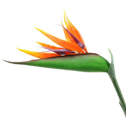 Strelitzie Paradiesvogelblume 95cm
