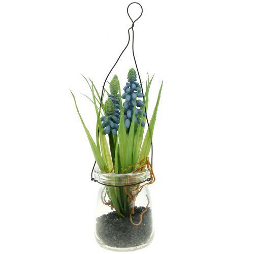 Traubenhyazinthe Blau im Glas zum Hängen H22cm