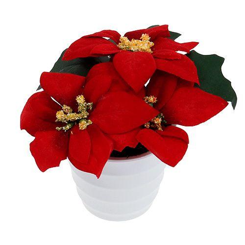 weihnachtsstern im topf rot k nstlich h11cm kaufen in schweiz. Black Bedroom Furniture Sets. Home Design Ideas
