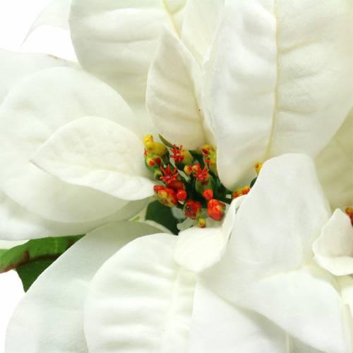Weihnachtsstern Strauß Weiß 52cm