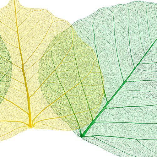 Willow Skeletton apfelgrün/gelb 200St.
