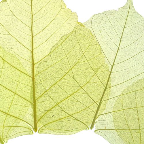 Willowblätter skelettiert Gelb Mix 200St