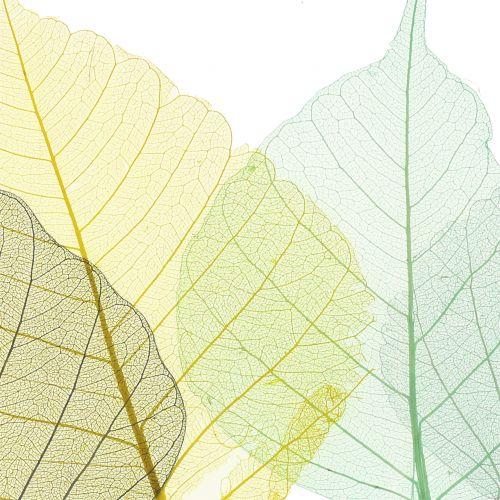 Willowblätter skelettiert Grau, Gelb, Türkis 200St