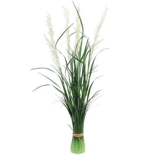 weisse Wedel im 11 cm Topf Pampasgras 5 Stück Cortaderia selloana Ziergras