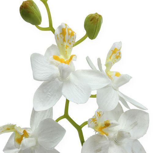 orchidee im topf wei 26cm kaufen in schweiz. Black Bedroom Furniture Sets. Home Design Ideas