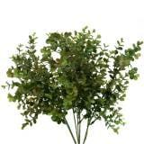 Buchsbaum Dekozweig Grün 40cm