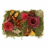 Trockenfloristik Mix mit Zapfen und Moos Rot 150g Herbstdeko