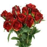Rose Rot 42cm 12St