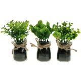 Pflanze im Glas 15cm 3St