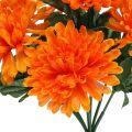 Chrysantheme Orange mit 7 Blüten