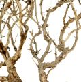Dry Tree Natur 500gr