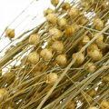 Flachs Natur Gräser für Trockenfloristik 100g
