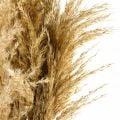 Pampasgras getrocknet Natur Trockenfloristik 75cm Bund mit 10St