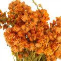 Strohblumen Trockenblumen Orange Klein 15g